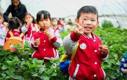 """相约草莓采摘园,开启""""莓""""好生活之旅 —北京王府幼儿园草莓采摘活动"""
