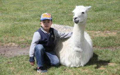 Son, I Would Like to Use My Whole Life Accompany You to Grow Up