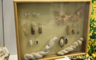 """Close to the Nature and Learn the Diversity of Creatures"" 丨A Trip to the National Animal Museum"