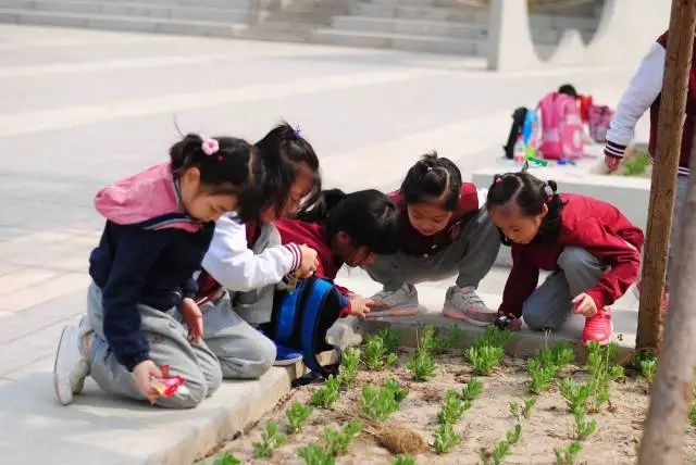 PYP Theme Exploration|An Invitation From Nature